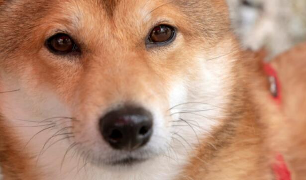 购买狗狗币的3个理由