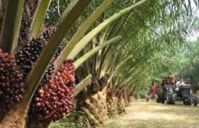 外国工人的回归很快将有助于缓解困扰种植业的劳动力短缺问题